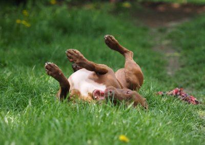 Hunde: Azra