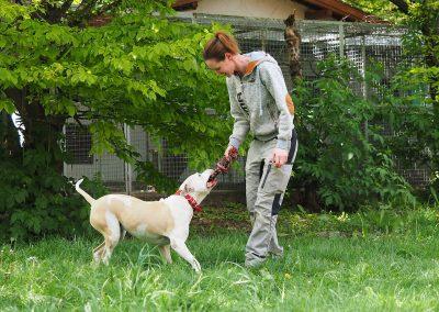 Hunde: American Staffordshire Hündin Nikita