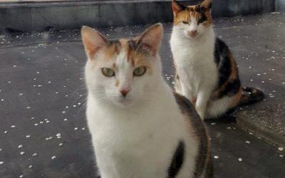 Fuchsi und Mimi