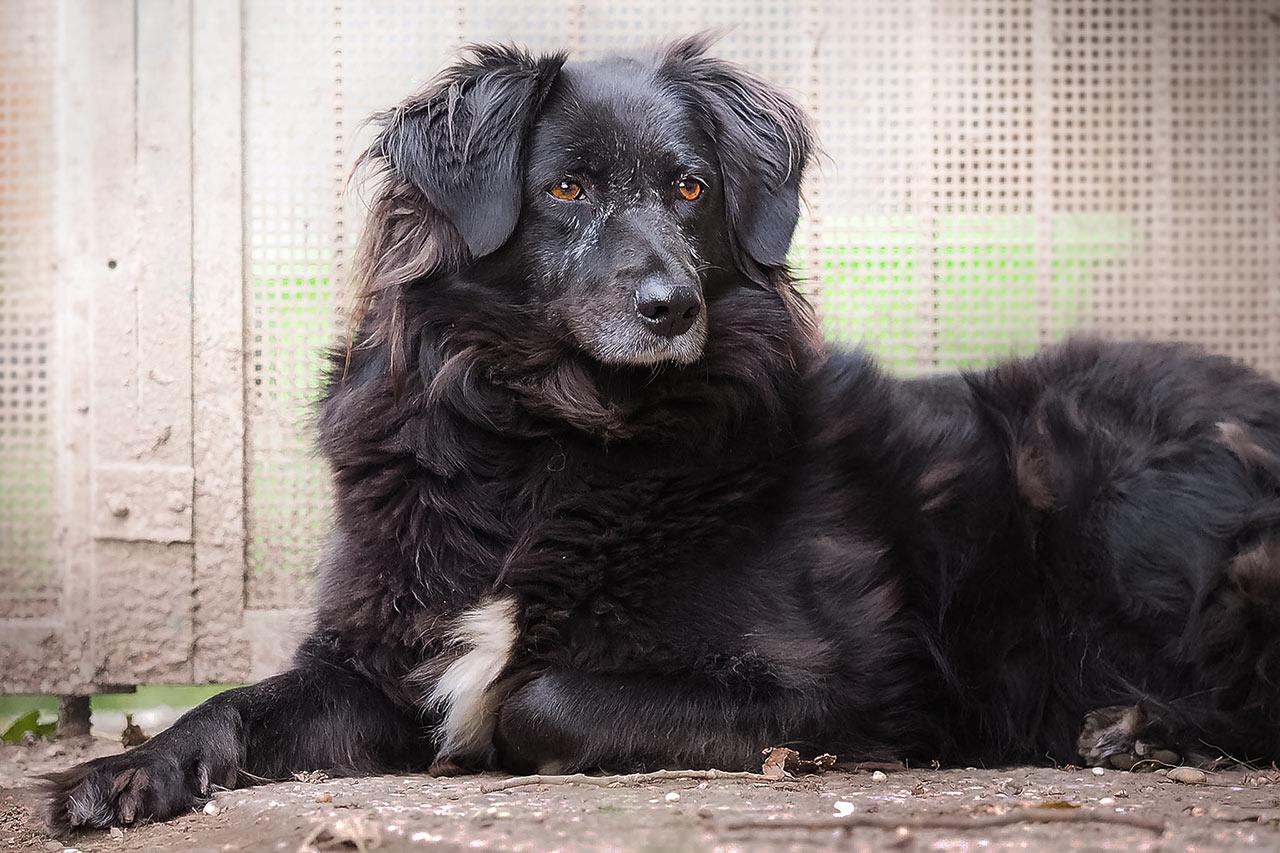 Hundevergabe: Dolly