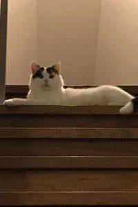 Ludwig majestätisch auf der Treppe