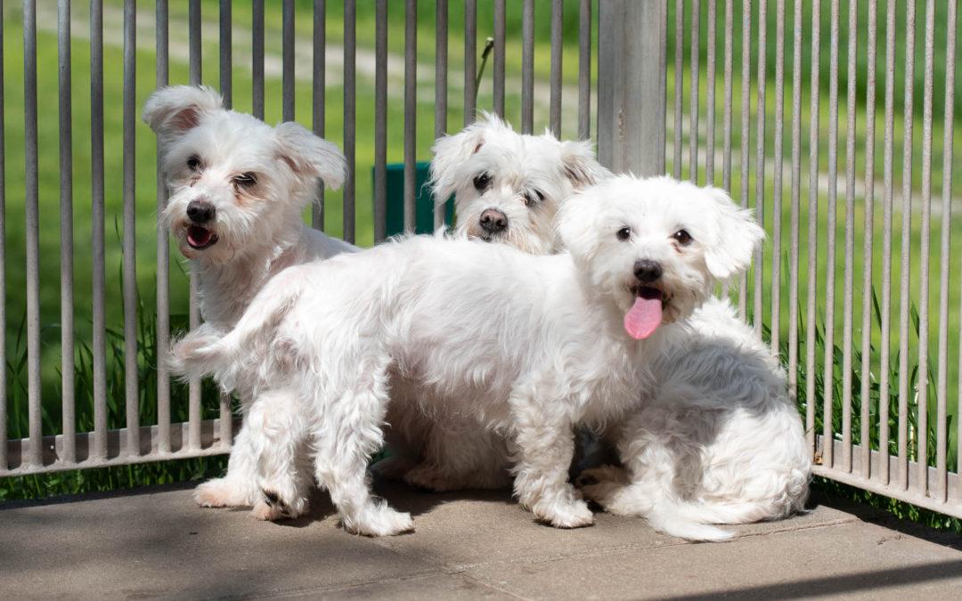 3 Malteser