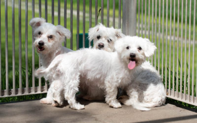 Hunde Tierheim Brunn